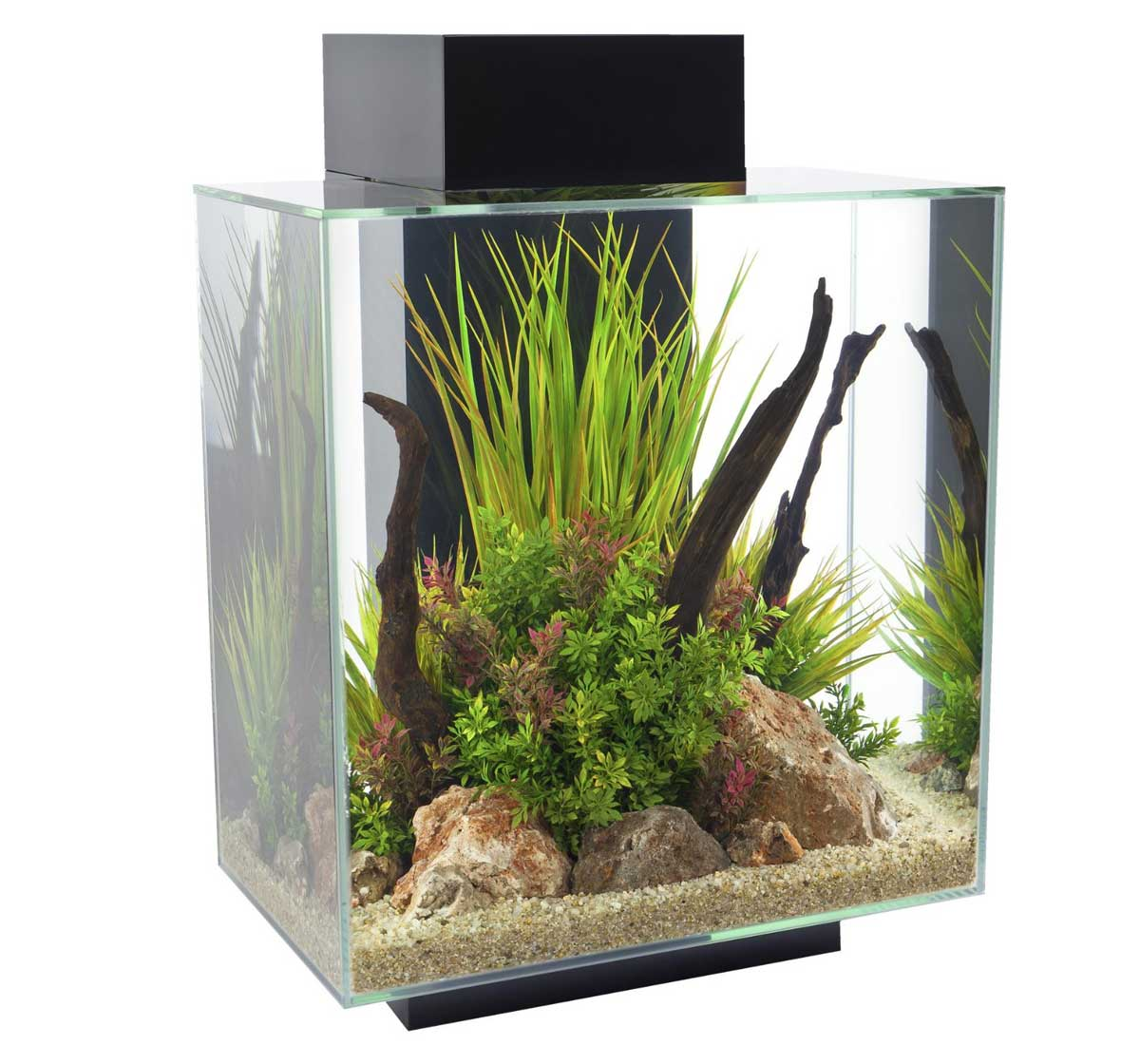 Fluval edge aquarium set led black 46ltr aquariums for Where to buy fish online