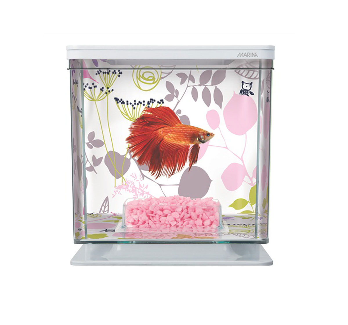 Betta fish tanks online india betta aquarium starter kit for Aquarium fish online