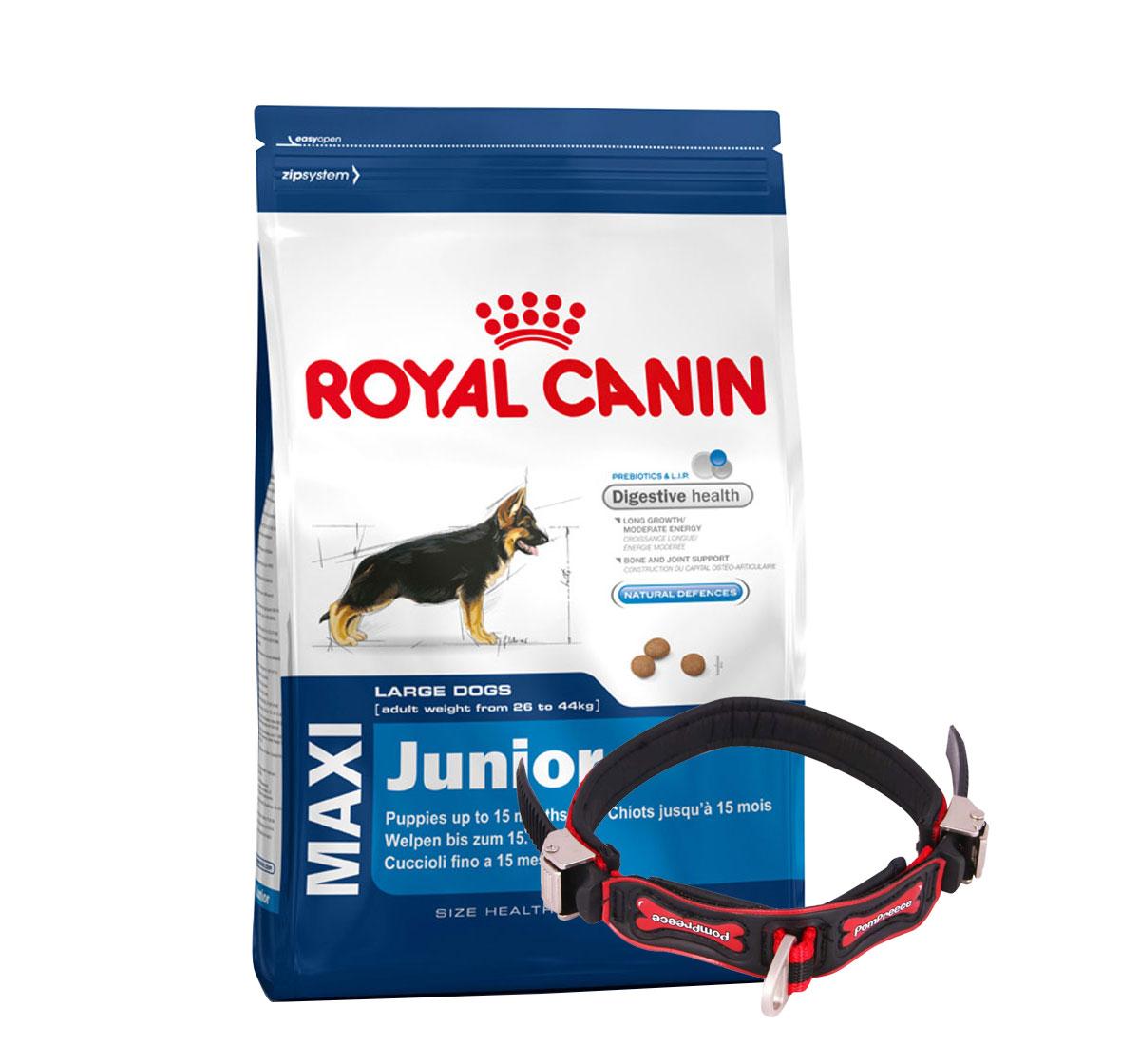 Royal Canin Maxi Junior - 4 Kg With Ergocomfort Dog Collar Small-Red