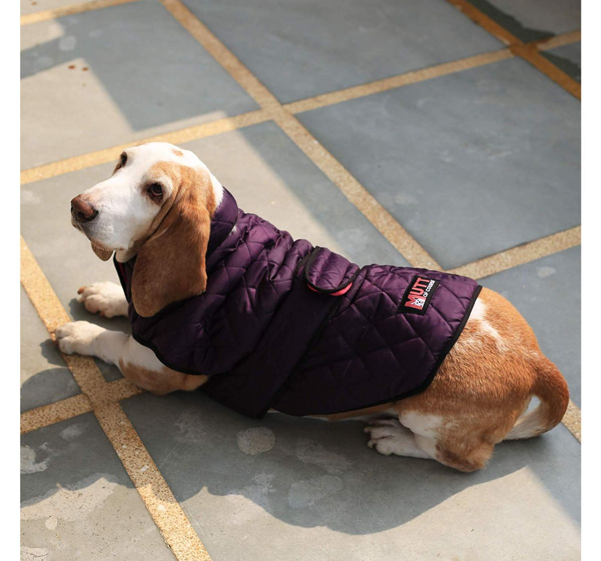Mutt Of Course Bomber Jacket Purple - Large