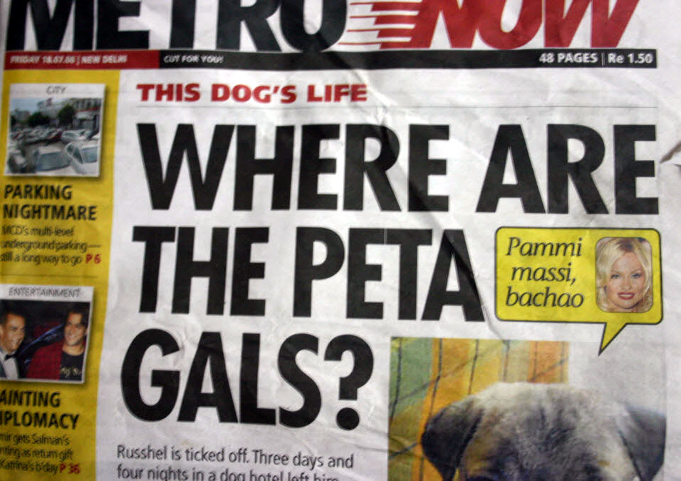 Where are the Pets gals, Gohils pet shop, gurgaon, delhi NCR