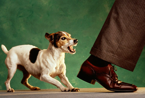 How To Make A Dog Less Aggressive Towards Other Dogs