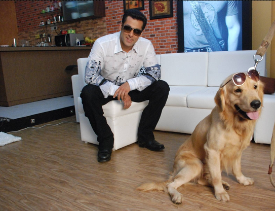 Golden Retriever in Bigg Boss