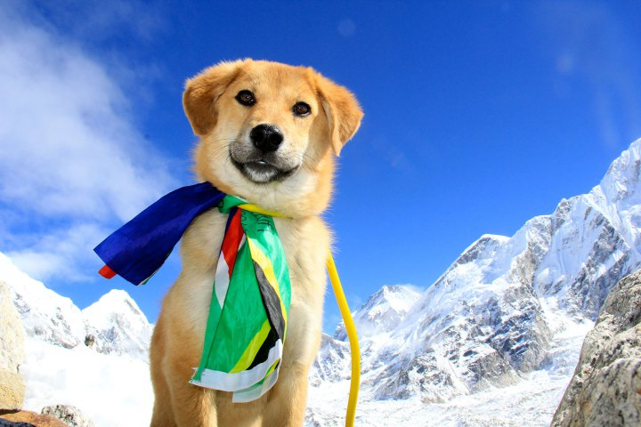 Meet Rupee the first Dog to climb Mount Everest