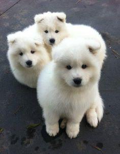 Cute Dog Names Dogspot In