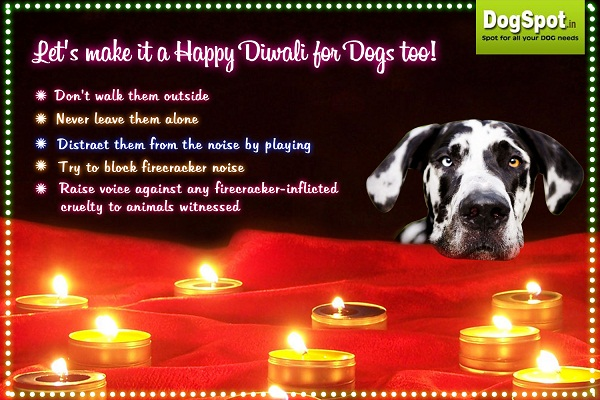 Tips to keep your pet safe this Diwali