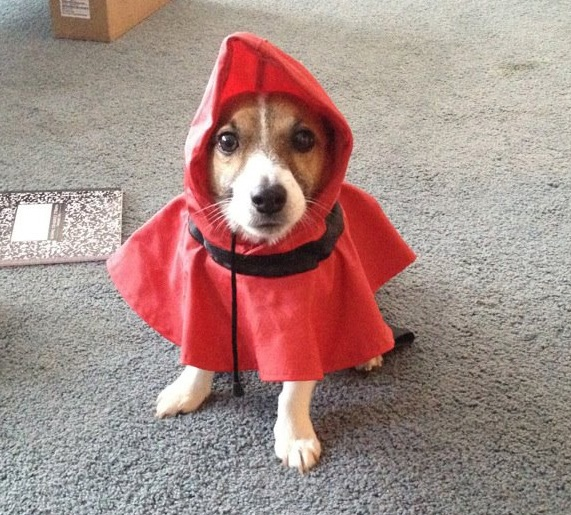 Dog wearingh raincoat