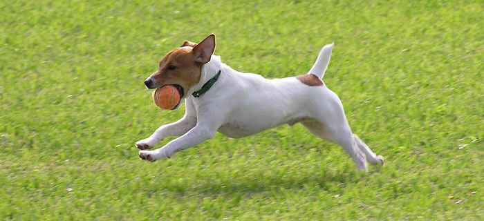 Dog Exercise wth Ball