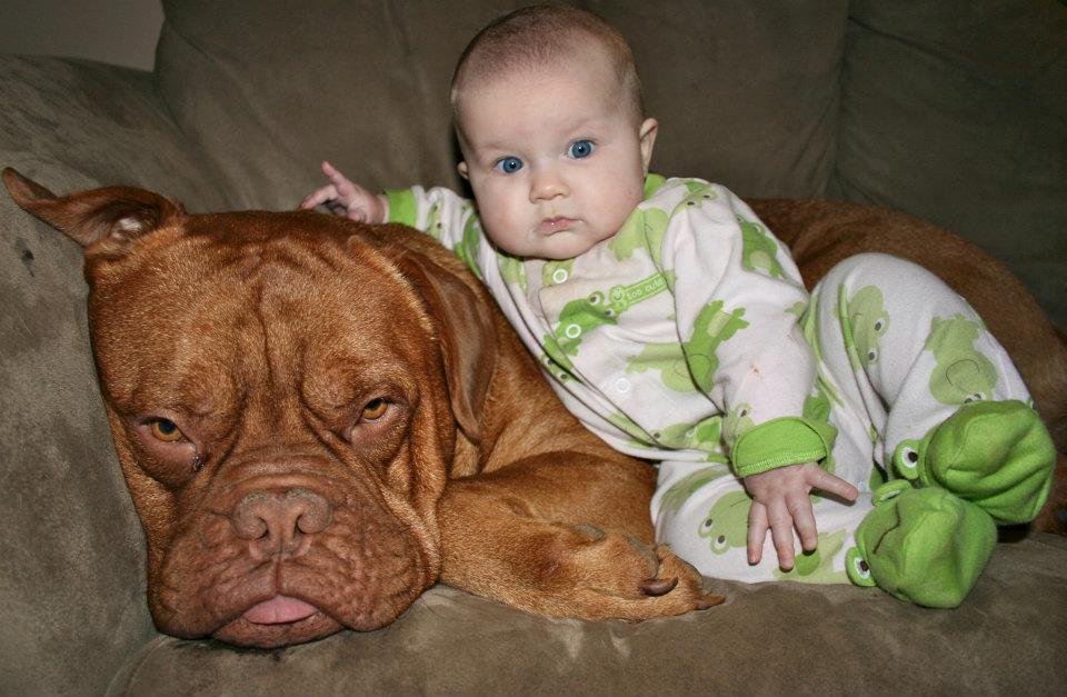 Dog Breeds That Are Great With Kids