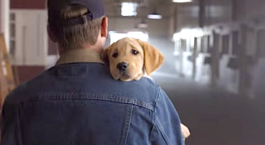 budwiser ad with dog