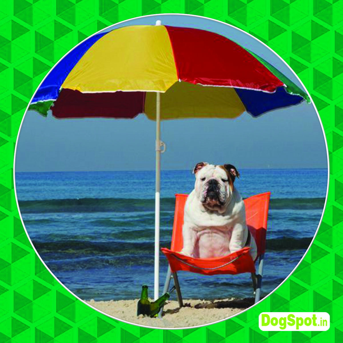 Dog Summer Care Tips