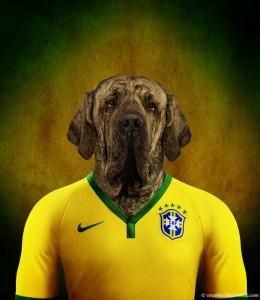 brazilian mastiff
