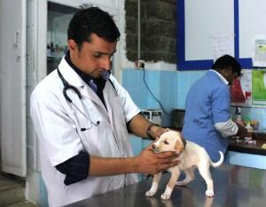 Veterinary graduates