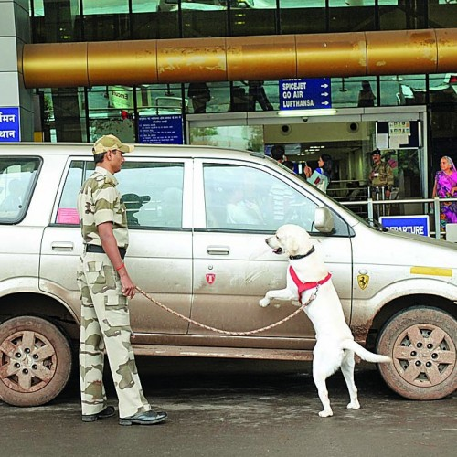 253358-dogs-checking-vehicles-at-airport