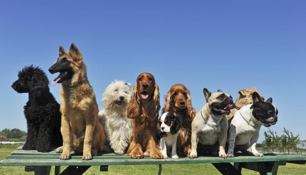 Dog-training table