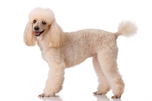 Puppy-Clip