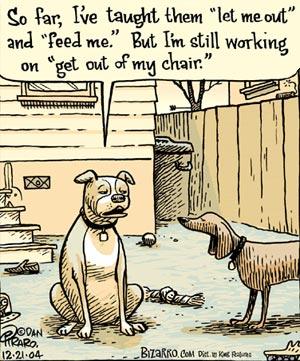 dog-training humans