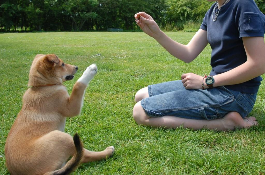 doglistening