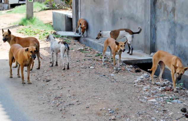 raipur stray dog