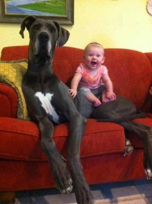lap dog 14