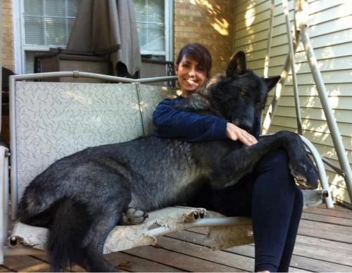 lap dog 2