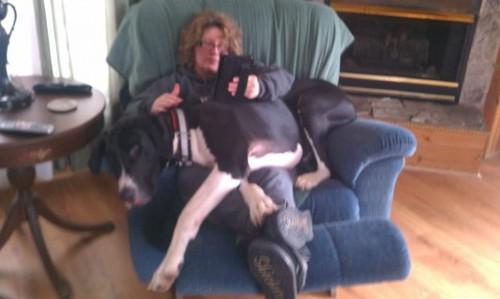 lap dog 4