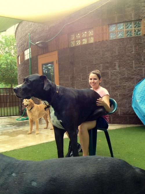 lap dog 5