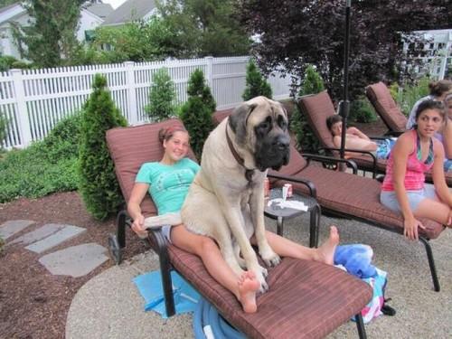 lap dog 7