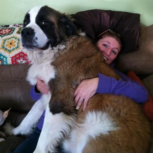 lap-dogs 6
