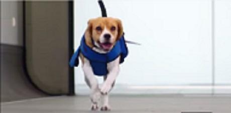 KLM Beagle