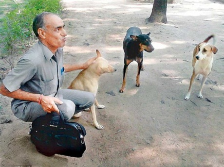 Stray Dogs to Help