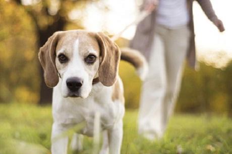 Dog epigenome