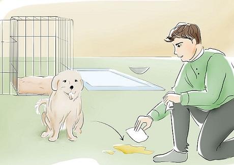 potty training 5