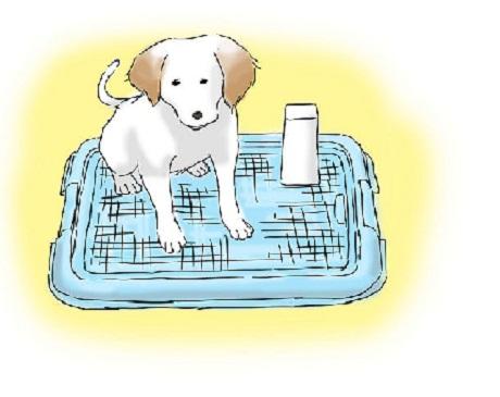 potty training 8
