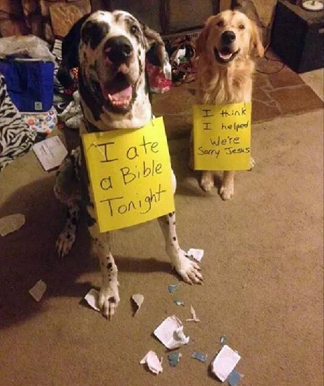Dog Shaming 1