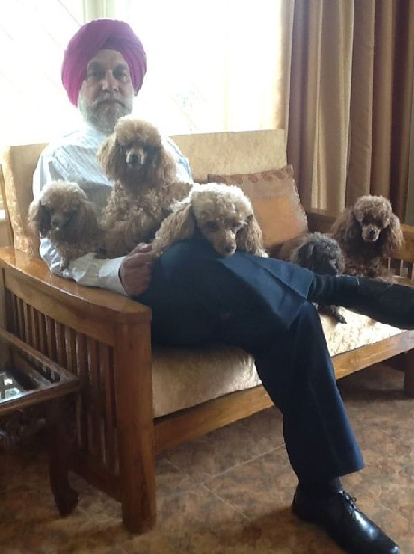 Harry uncle and Puppies