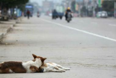 stray dog accidnet