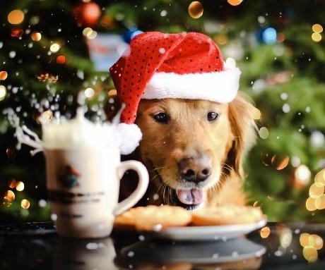 Christmas care 1
