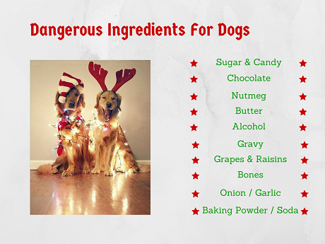 Healthy Ingredients For Dogs (2)