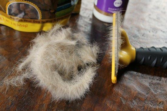dog-hair
