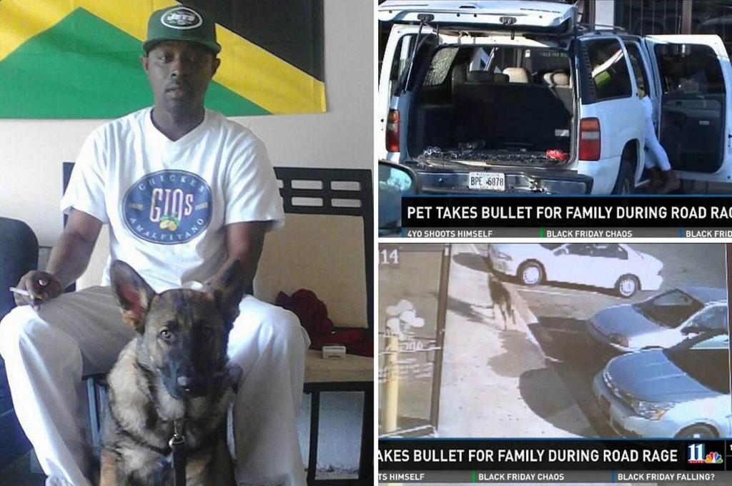 dog takes bullet