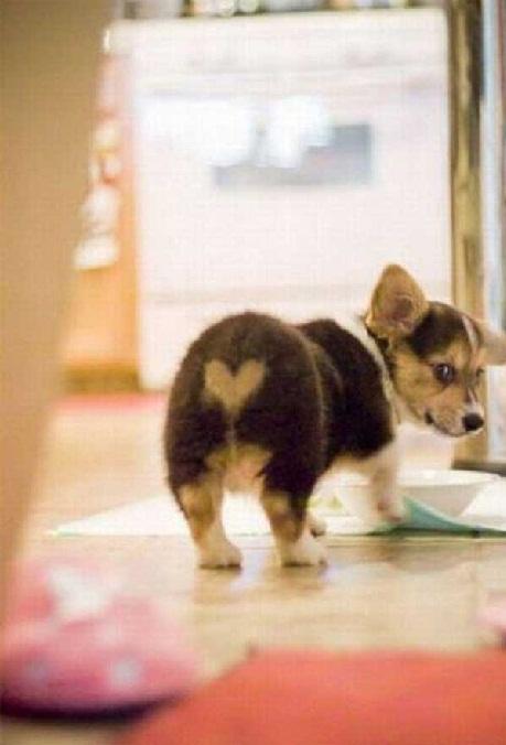 heart bum