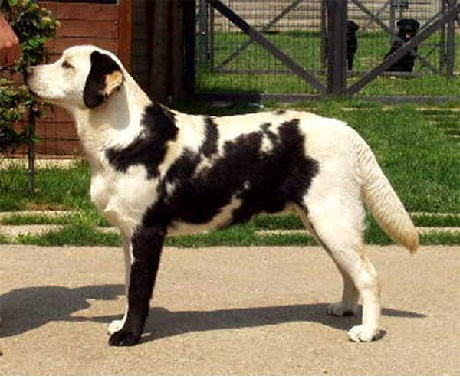 lab with black markings