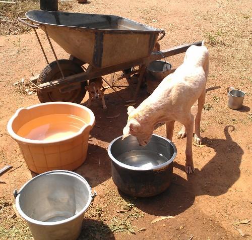 water feeding