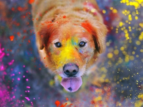 pet_care_during_holi1