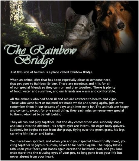 The rainbow brdge
