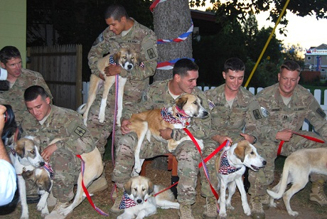 afghanistan dogs