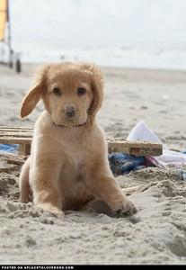 cute-puppy-on-the-beach