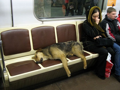 dogs in trains
