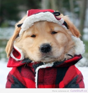 golden_retriever_puppy_dressed_as_a_lumberjack